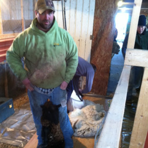 Fred with Noir on deck for shearing.