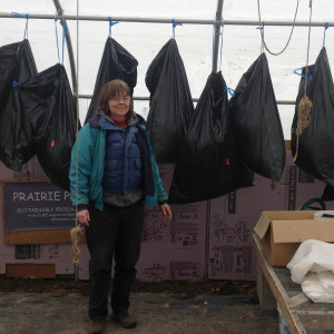 Yours Truly with bags of fleece hung for drying in the greenhouse.